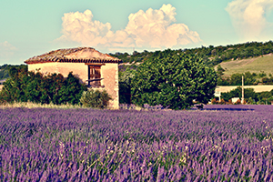 Bike Tour to Provence and Nice
